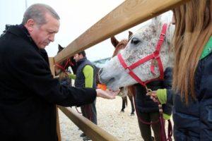 Atları elleriyle besledi