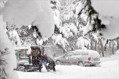 Giresun'da kardan ağaçlar devrildi