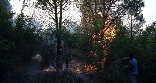 Antalya'da 1.5 hektar orman kül oldu