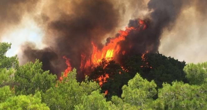 Manavgat'ta orman yangını: 1 yaralı