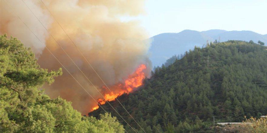 Antalya, Kumluca'daki yangın tekrardan başladı!
