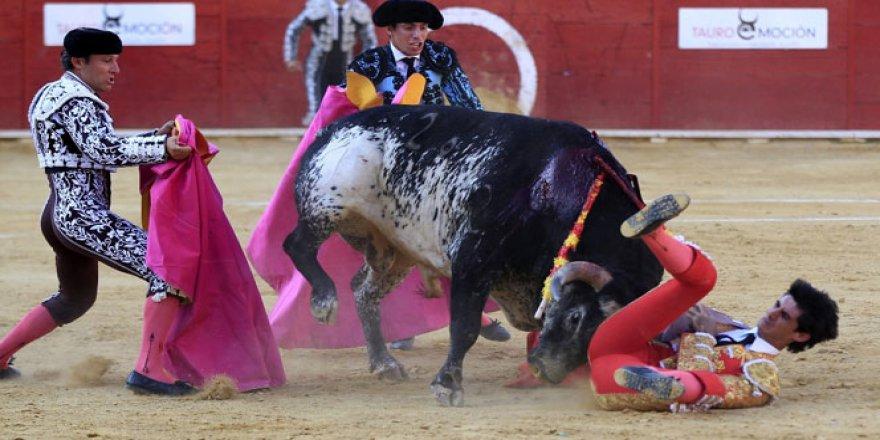 Boğa matadoru öldürdü