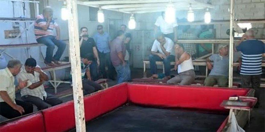 Manisa'da horoz dövüşüne polis baskını: 28 gözaltı!
