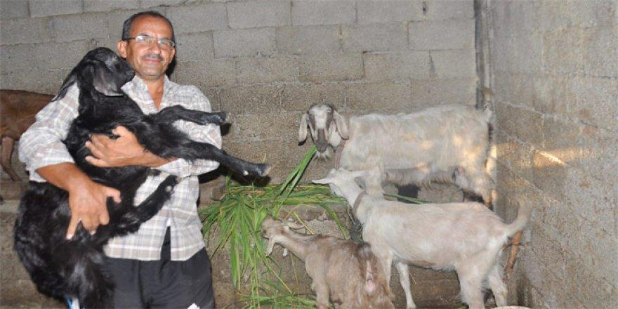 Tek mal varlığı olan keçilerini şehitlere bağışlıyor