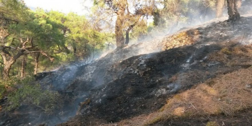Manisa'da yangın!