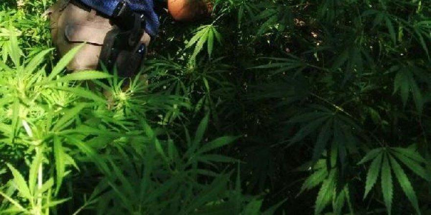 Diyarbakır'da UNESCO listesindeki Hevsel Bahçeleri'nde uyuşturucu operasyonu!