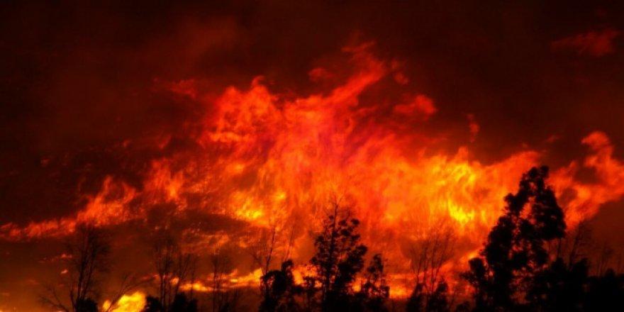 İzmir, Karşıyaka'da büyük orman yangını!