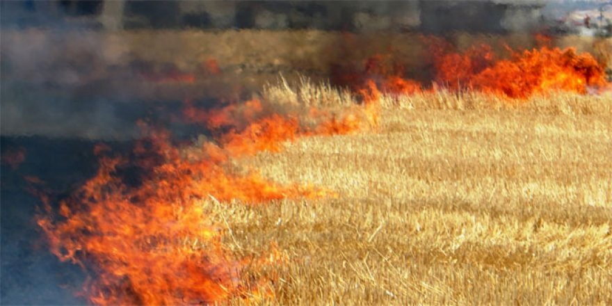 Düzce Belediyesi İtfaiye Müdürlüğü: 'Anız yangınları doğaya zarar veriyor'