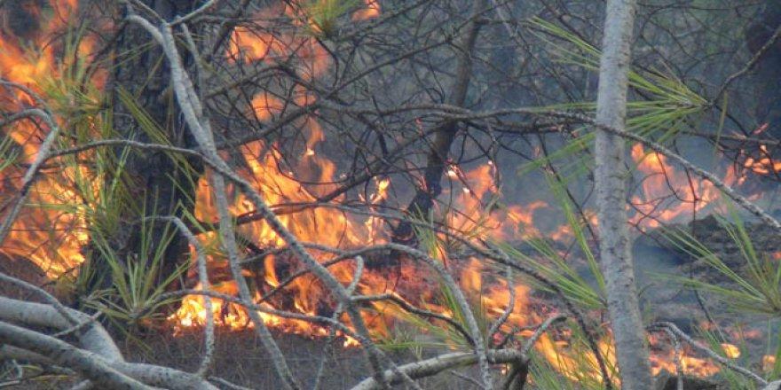 Mersin, Erdemli'de orman yangını