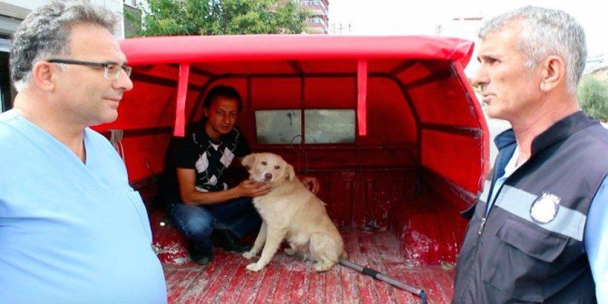 Manisa, Alaşehir'de Kaybettiği Köpeğini Tesadüfen İzlediği Görüntülerde Buldu