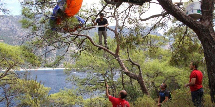 Muğla, Fethiye'de paraşütçünün hayatını ağaç kurtardı
