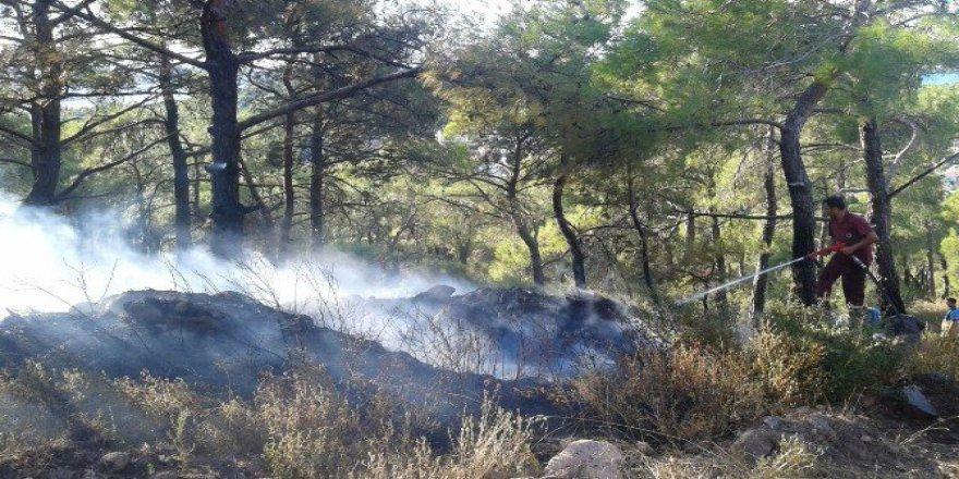 Balıkesir, Avyalık'ta Maytap İle Oynayan Çocuklar Orman Yangını Çıkardı