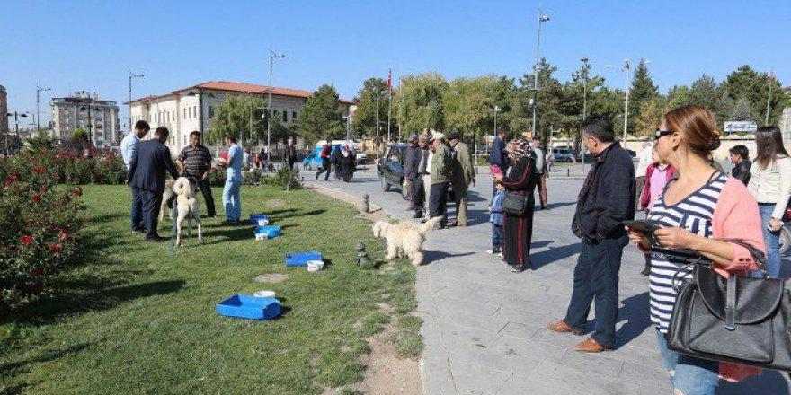 Sivas'ta 4 Ekim Hayvanları Koruma Günü Etkinliği