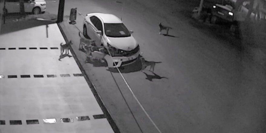 Sakarya'da sokak köpekleri otomobilin tamponunu parçaladı