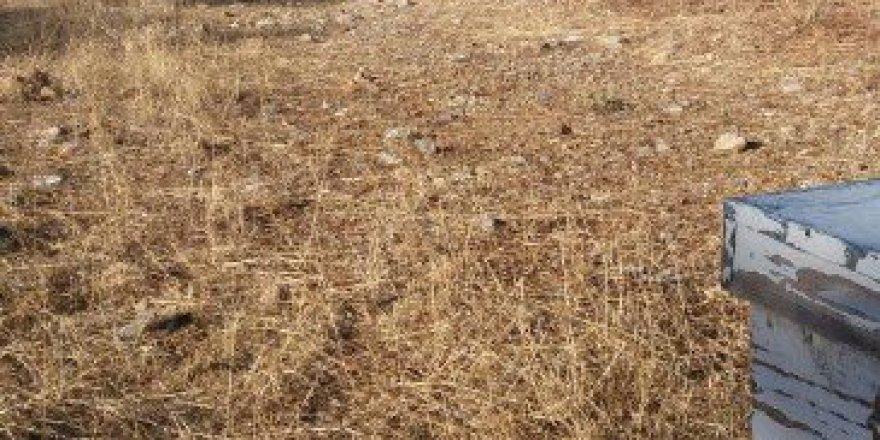 Aydın, Söke'de Hırsızlar 52 Kovan Arıyı Balıyla Birlikte Çaldı