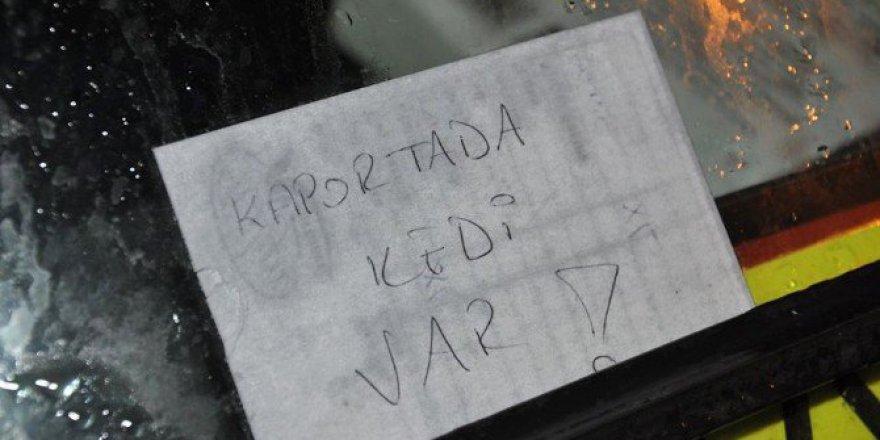 Ayonkarahisar'da duyarlı vatandaşın bıraktığı not kedinin hayatını kurtardı