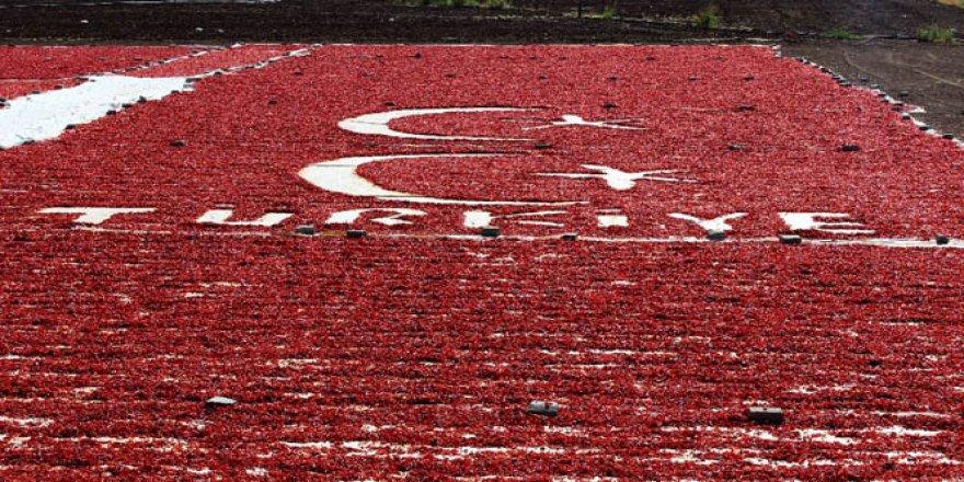 Mustafa Güzel Adıyaman'da Bayrak sevgisini tarlasına işledi