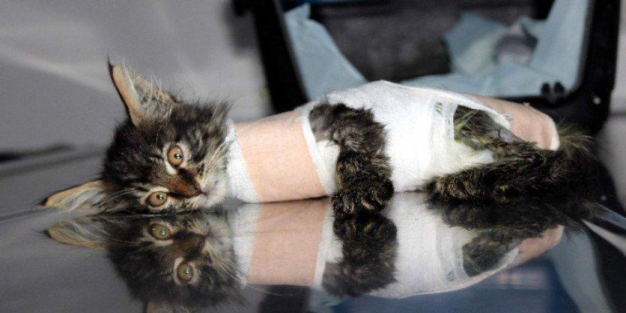 Bursa'da Otomobilin Ezdiği Yavru Kedi Protez Bacakla Yürüyecek