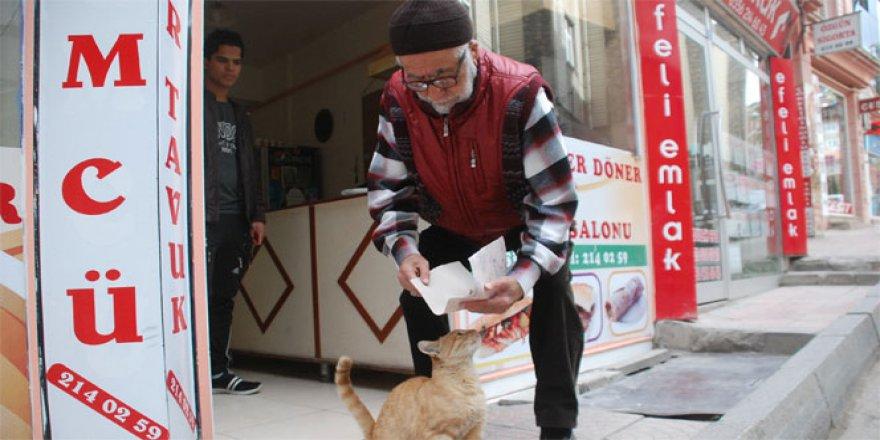 Sokak kedisini tavuk dönerle besliyor