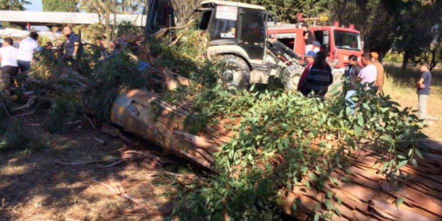 Serik'te ağacın altında kalan bir kişi hayatını kaybetti