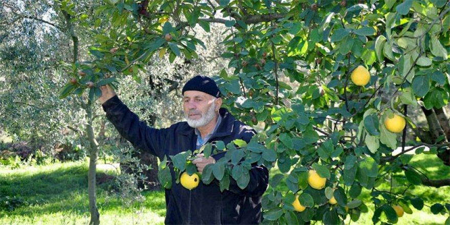 İznik'te Bir ağaçta iki meyve
