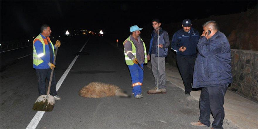Gaziantep'te kamyonun telef ettiği hayvanlara başka bir araç daha çarptı