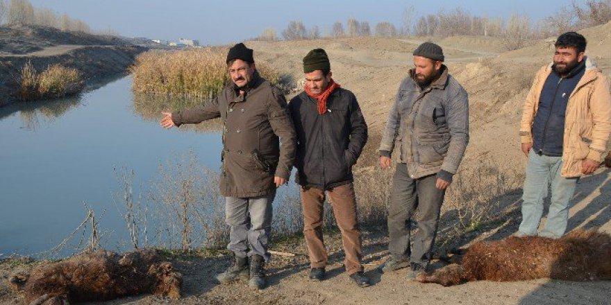 Iğdır'da Kanalizasyon Karışan Su Kanalı Tehlike Saçıyor