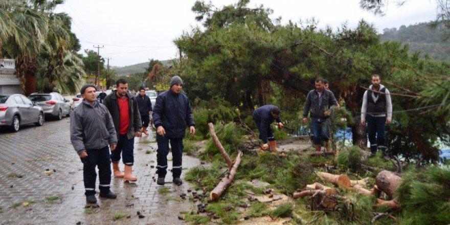 Ayvalık'ta Meydana Gelen Hortum Ağaçları Devirdi, Çatıları Uçurdu
