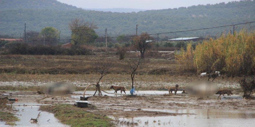 Ayvalık'ta tarım arazilerini sular bastı, hayvanlar telef oldu