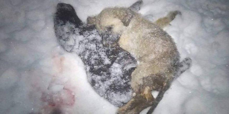 Giresun'da yürek yakan görüntüler! Hayvanlar donarak can veriyor