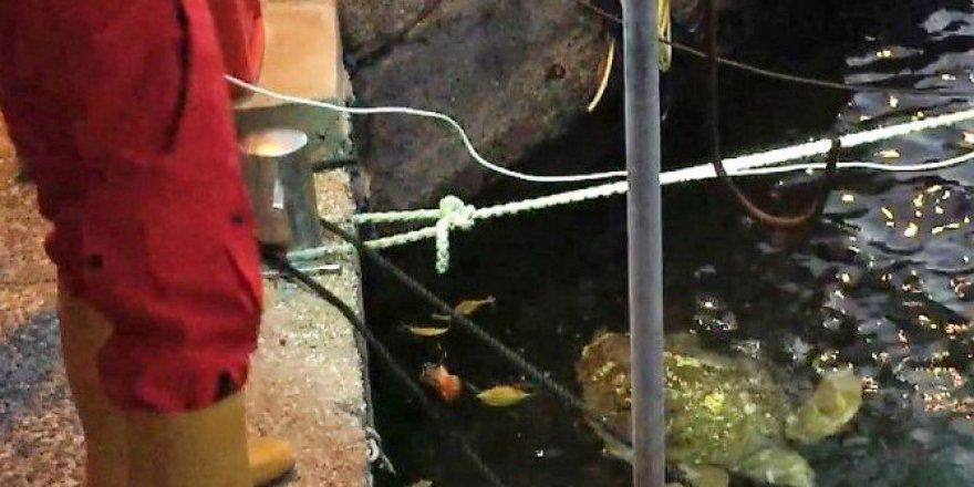 Bodrum'da Balıkçı Barınağında Kaplumbağa Operasyonu