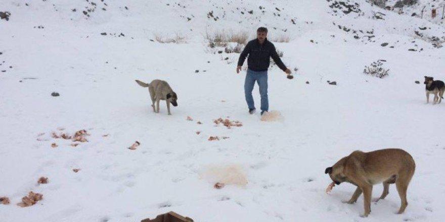 Eskişehir'de Vatandaşlar Sokak Hayvanlarını Unutmadı