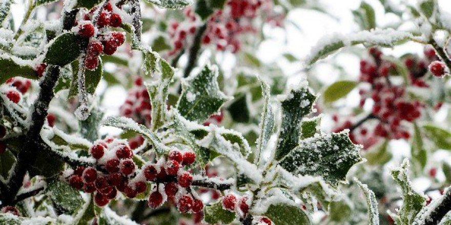 Galiçya Bölgesinde Soğuk Meyve Ağaçlarını Tehdit Ediyor