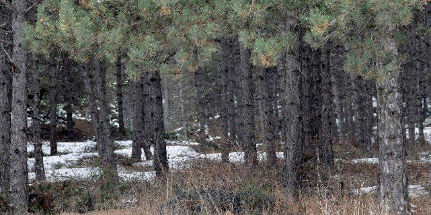 Ormanlarımız Kış aylarında da tehlike altında