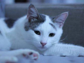 Evcil Kedilerde Nezle Salgını