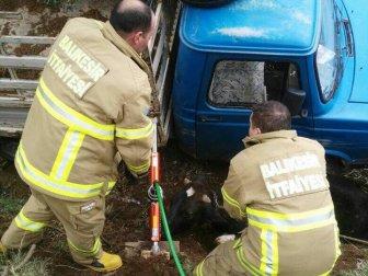 Balıkesir, Edremit'te Trafik Kazasında Sıkışan İneği İtfaiye Kurtardı