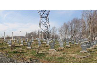 Bu Barınakta Hayvan Mezarlığı Var