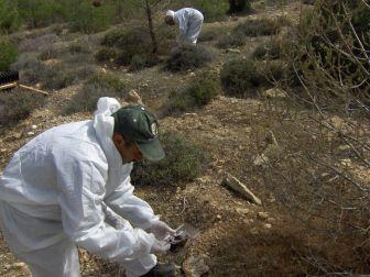 Mersin Ormanlarında Zararlı Böceklere Karşı Biyolojik Mücadele Başladı