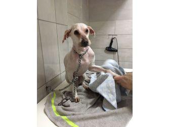 Konteynere Kapatılan Köpeğin Hayatı İhbarla Değişti