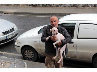 Konteynırda Bulunan Köpeğin Sağlık Durumu İyi