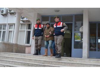 Hayvan Çalan Hırsızlık Çetesi Yakalandı