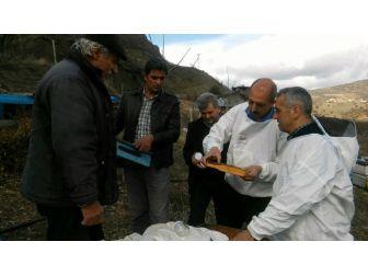 Tunceli'deki Arı Ölümleri İnceleniyor