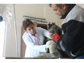 Hayvan Rehabilitasyon Merkezi Yenilendi