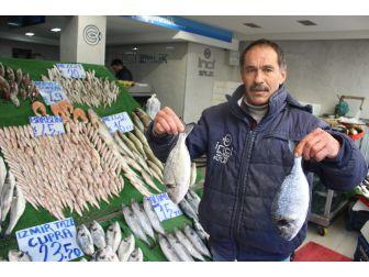 """Balıkçı Kutay Yılmaz: """"Hamsi Az Çıkınca, İşlerimiz Azaldı"""""""