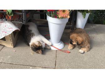 Birbirlerine Düşman Olarak Bilinen Kedi Ve Köpeğin Dostluğu