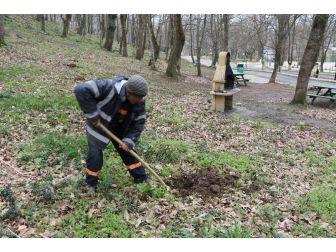 Akyazı Orman Park Meyve Ağaçları İle Donatıldı