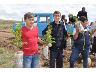 Sorgun'da Bin 500 Fidan Toprakla Buluştu