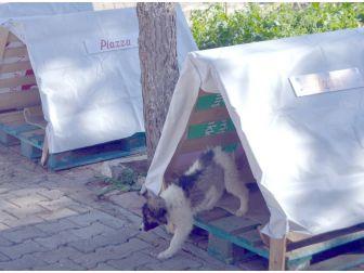 Piazza'dan Sokak Hayvanlarına Yuva Desteği