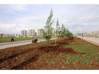 Bağlar Belediyesi Refüjleri Ağaçlandırıyor