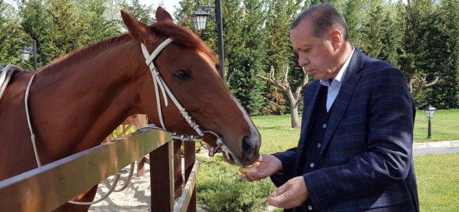 Cumhurbaşkanı Erdoğan'ın rekor kıran karesi! Ata bindi..